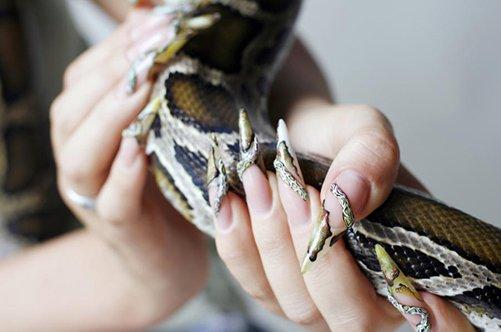 фото дизайна ногтей разноцветный френч змеиный принт